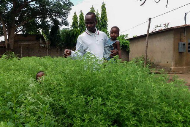 Artemisia-Afra-IMG-20200629-WA0005